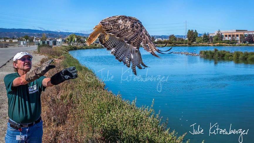 hawk-rescue20