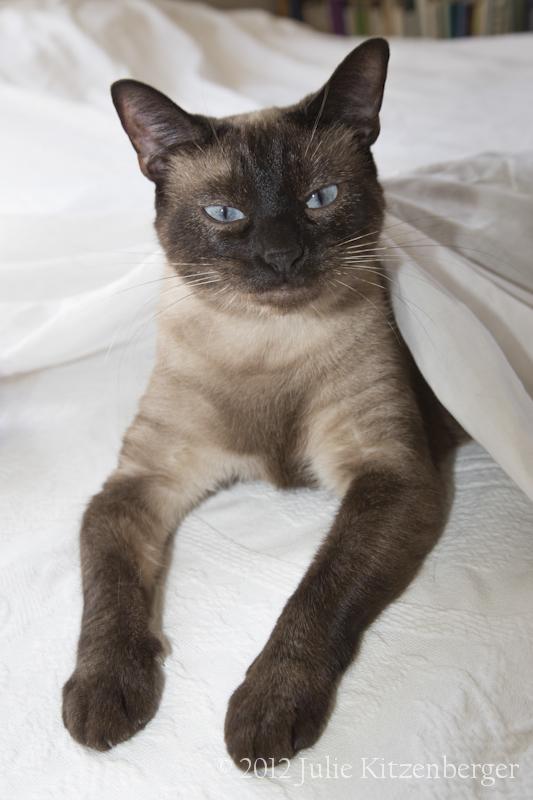 Coco under sheet