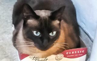 Coco in her Fancy Feast box